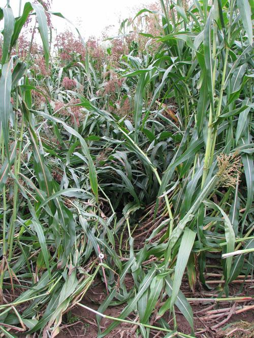 Wertprüfung 2013 Sortiment Biomasse