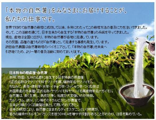 自然薯栽培で日本古来の品種系統を守ることにもなります。