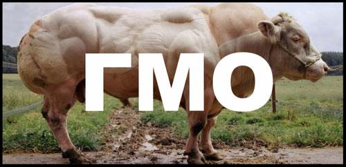 Вред ГМО-подуктов