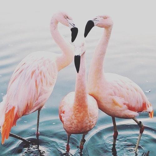 ich liebe flamingos, ihre Farbe ist einfach toll