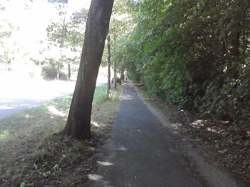 Km 12: Kücknitz liegt hinter mir. Die lange schattige Gerade vor mir.