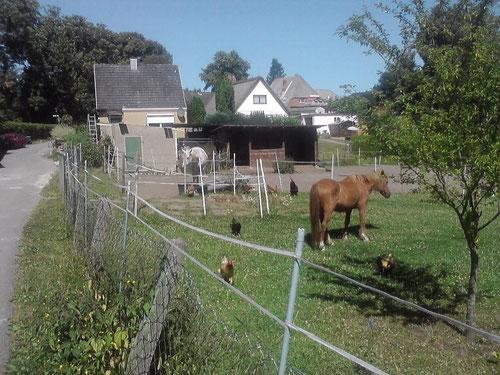 ...an den Pferden komme ich 8x vorbei. Die wären wahrscheinlich gern mitgekommen. Der Weg schlängelt sich weiter hoch...