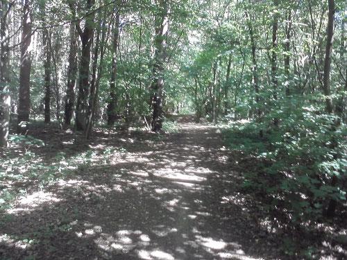 Km 3-7: es geht durch den Wald. Im Schatten der Bäume ist es sehr angenehm.