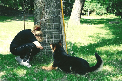 Rettungshundverbellen