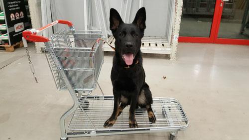 Shopping im Baumarkt