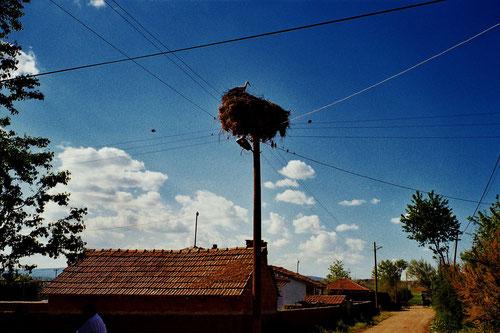 ein letztes Mal sahen wir Storchennester auf den verzweigten Strom-Masten