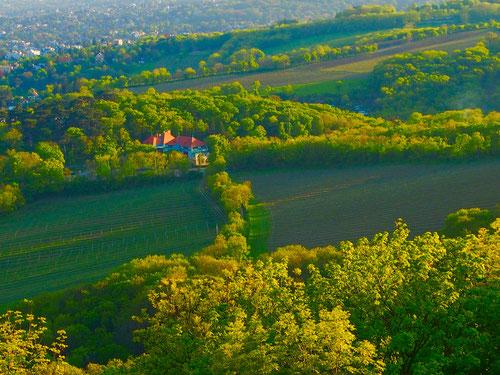 Blick auf die Hügel von Grinzing