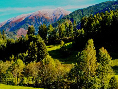 die lockeren Mischwälder richten sich f+r den Winter ein