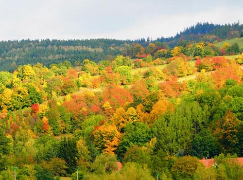 die Natur in einem unvergleichlichen Raum der Farben