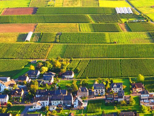 das Dorf Kinheim umgeben Weinbergen