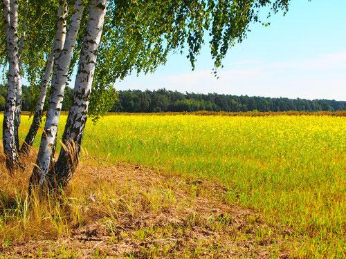 Traumhfte Landschaften und gepflegte Felder soweit das Auge reichte