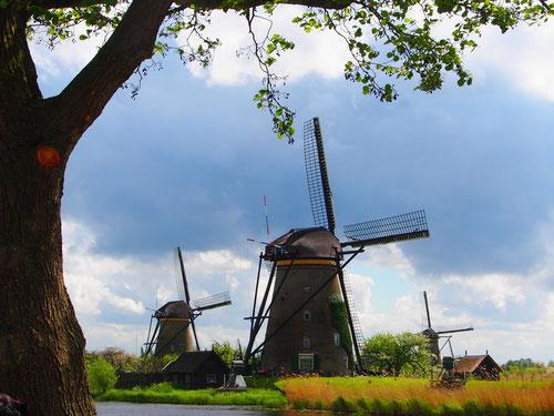 19 historische Windmühlen von 1740 stehen hier in Reih und Glied
