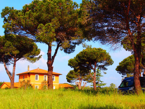 malerische Pinien-Bäume säumen auch heute noch viele Nebenstrassen