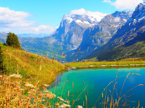 das markante Wetterhorn bei Grindelwald