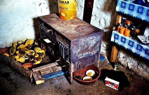 in der kleinen Küche hatten es die Kücken sehr viel wärmer