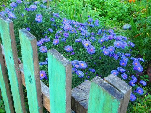 der Holzzaun im typisch russischen grün gestrichen