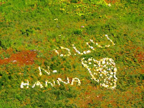 eine übergrosse, ungarische Liebeserklärung an Hanni