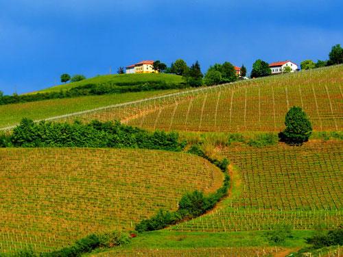 gut zu bewirtschaftende Wein-Felder an den flachen Hügeln