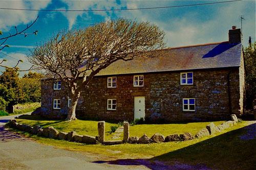 wunderschönes Landhaus, beschützt von einer windgebeugten Erle
