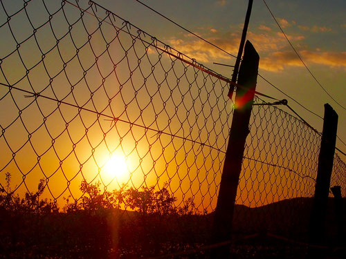 Sonnenuntergang am Zaun eines riesigen Obstbaum-Feldes