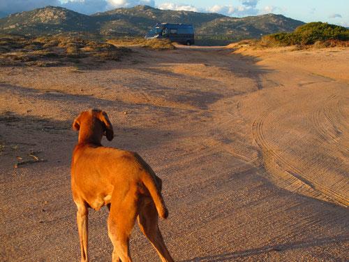 auch Lara fand unseren Stellplatz inmitten der Dünen toll