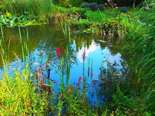 der wunderschön angelegte Zauber-Garten von Alice