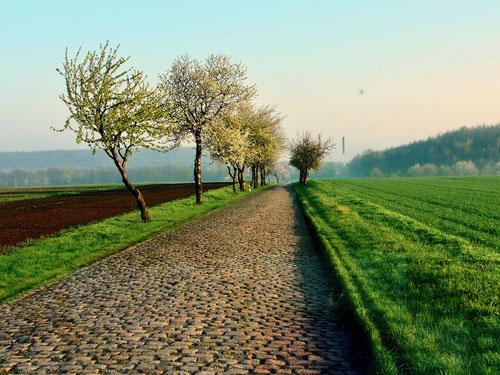 grob gepflasterte Nebenstrasse vor Zwengau