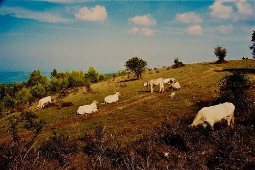 ein Sonderlob den italienischen National-Parks