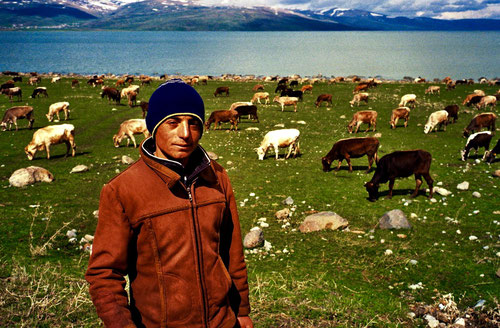unten am See zog die erste Kuh-Herde vorbei