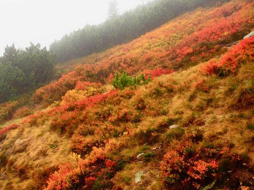 Aufstieg zur Schneekoppe umrahmt von einer furiosen Mountain-Flora