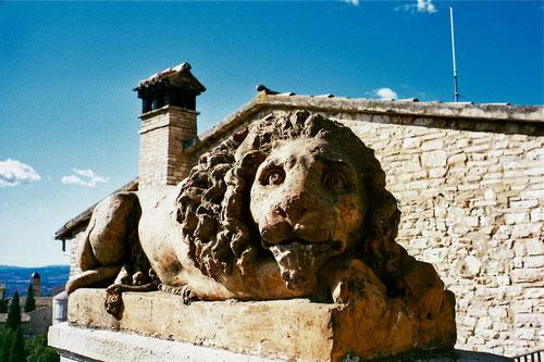 ein eher unauffällig platzierter Löwe schaut nach oben