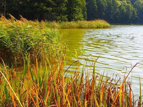 die Masurischen Seen - ein Eldorado der Natur