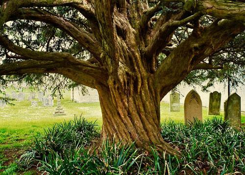 ein Baum für die Ewigkeit