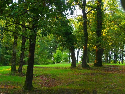 der Wald um uns herum, dekorativ, wie nur die Natur es sein kann