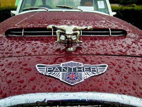 beide Panther nass!