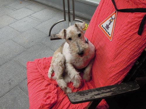 """Übrigens: ich musste ab 11 Uhr ins Vorderhaus! Welcher andere """" blöde Hund """" hat auf meinem Stuhl (siehe dazu Schild!) seine Marke hinterlassen???!"""