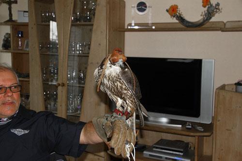 hier mit Kopfbedeckung.......der Falke!Damit er sich nicht so sehr erschrickt!