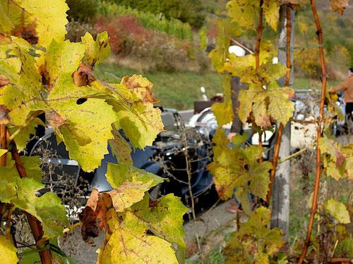 was verbirgt sich hinter den Weinblättern?