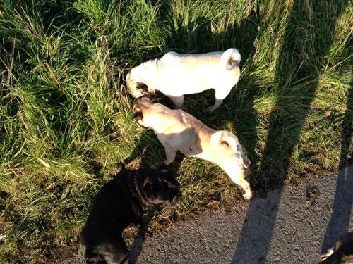 Fabi (Mitte) mit neuen Freunden