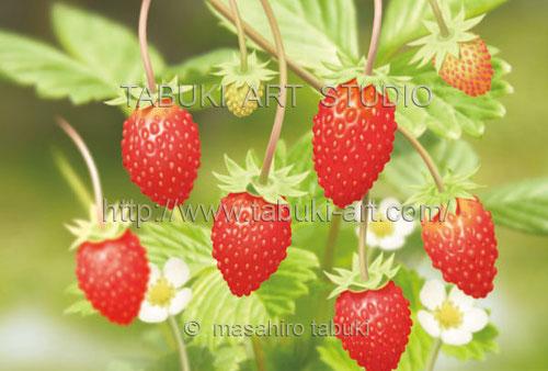 ワイルドストロベリーのイラスト.果物,リアル,完熟したイチゴ