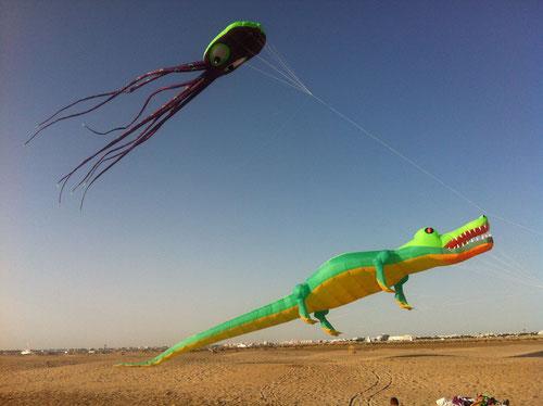 Zum ersten mal fliegen Tintenfisch und Krokodil gemeinsam. Dabie ist der Tintenfisch gleich mein Lifterdrachen. L' Esbiguette 2013