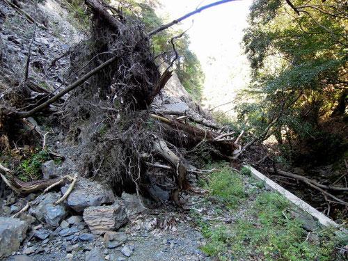 林道は崖崩れで完全に塞がっていました。歩いていく以外ありませんね。