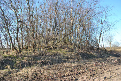 Hünengrab Oberer Holzweg an der rechten Seite