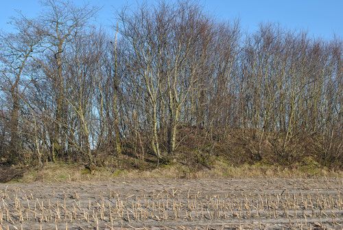 Hünengrab Oberer Holzweg an der linken Seite
