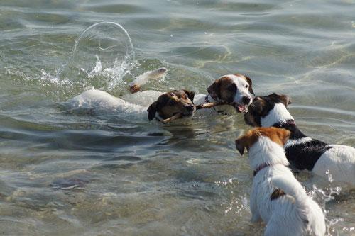 Wir können auch schwimmen