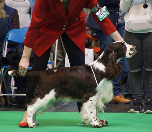 """Calvdale Keelman"" at Crufts 2017, Photo: Martina Hladka"