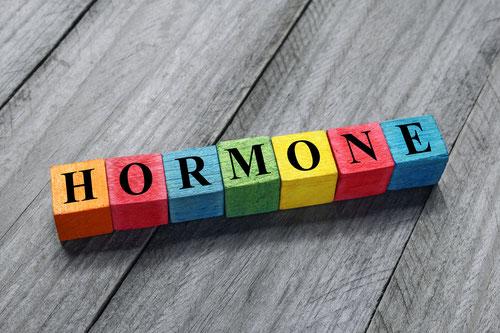 Wort Hormone auf Holzklötzen