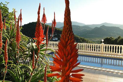 Auf dem Bild sieht man den Pool der Ferienwohnung Valencia mit der neuen Beleuchtung auf den Balustraden