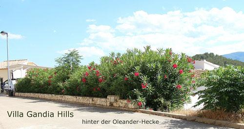 Die Villa Gandia Hills liegt verborgen hinter einer Oleanderhecke, Foto: Birgitta Kuhlmey, 30.5.2014