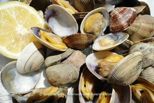 Japanische Teppichmuschel, Almeja Japonesa, Mejillones Japoneses in der Ferienwohnung-Valencia, Foto (c) Birgitta